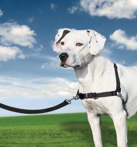 PetSafe Harnais pour Chien Moyen Easy Walk